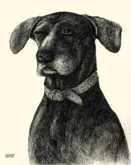 Rocko Dog