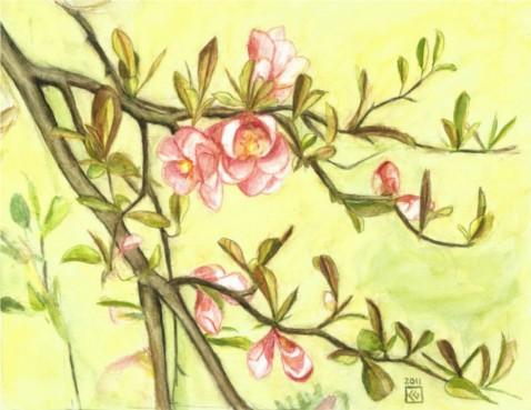Zierquitte rosa